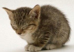 sov gott!